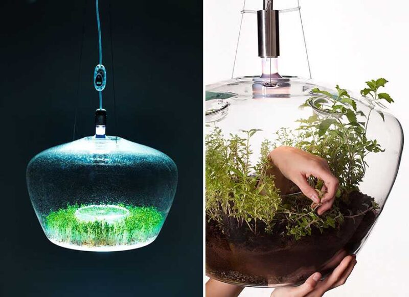 Greenhouse Lamp