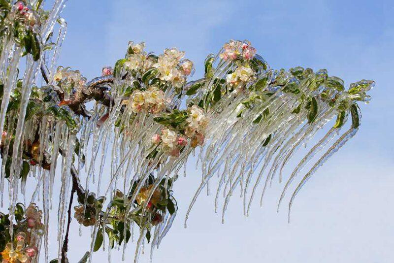 frozen-ice-art-12