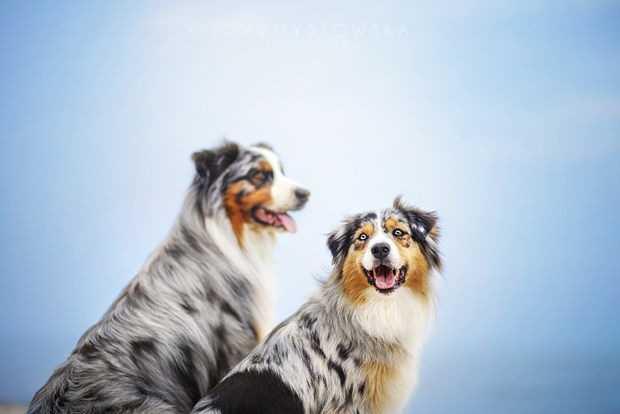 Trustworthy Friends 3