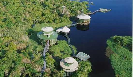 The Amazon Treetops