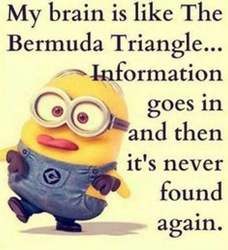 45 Funny Minions Quotes and Pics 2