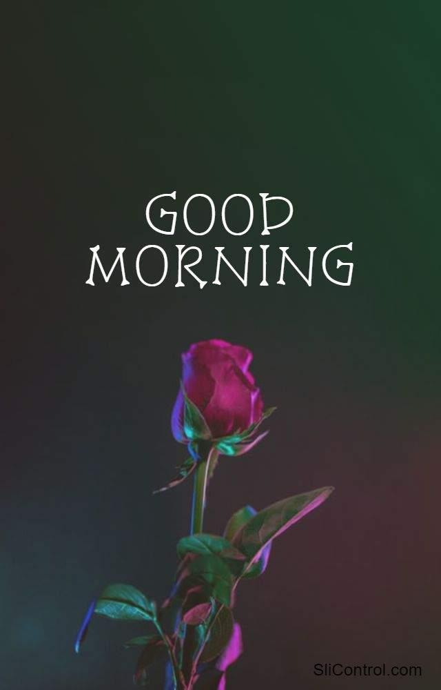 good morning flowers for her