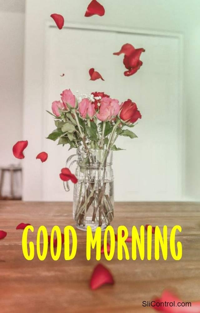 good morning flower pic
