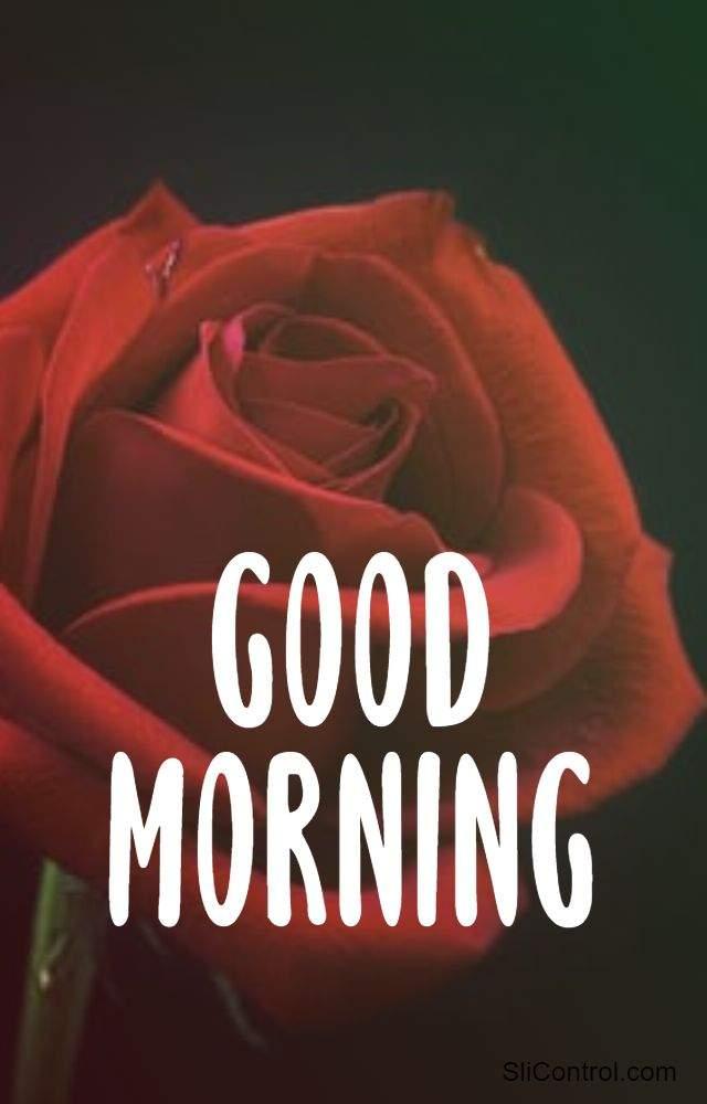 best good morning flower pic