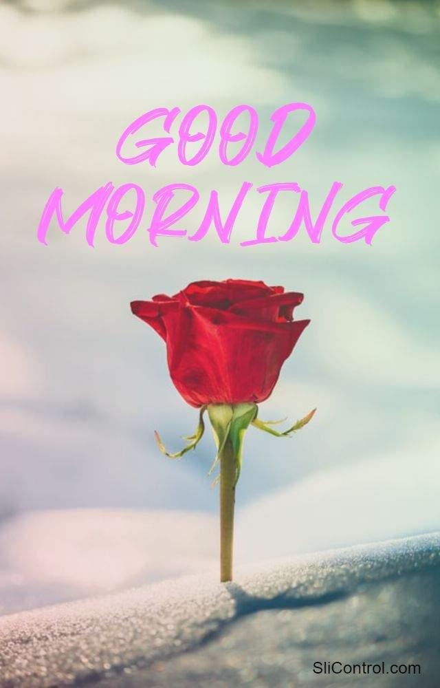 good morning flowers love