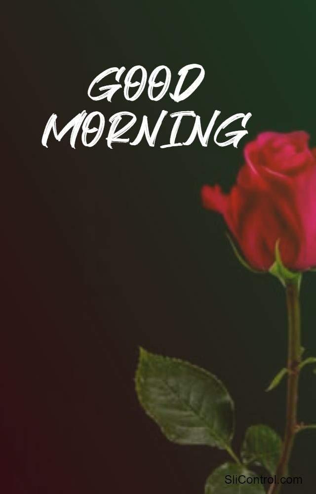 best good morning flowers love