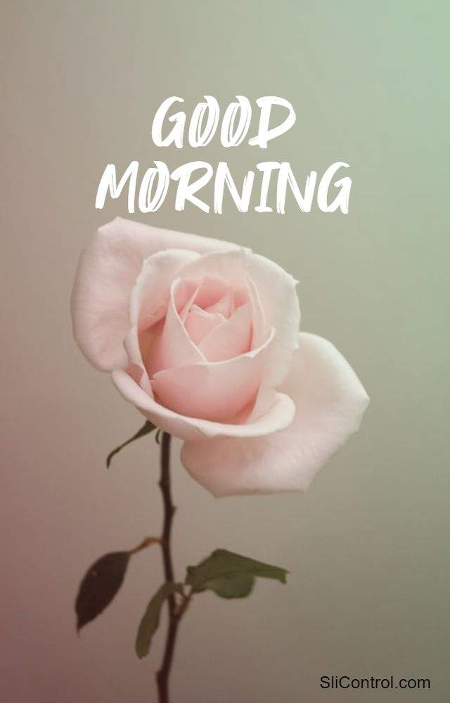 best good morning beautiful flowers images