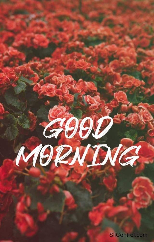 good morning flowers for lovers