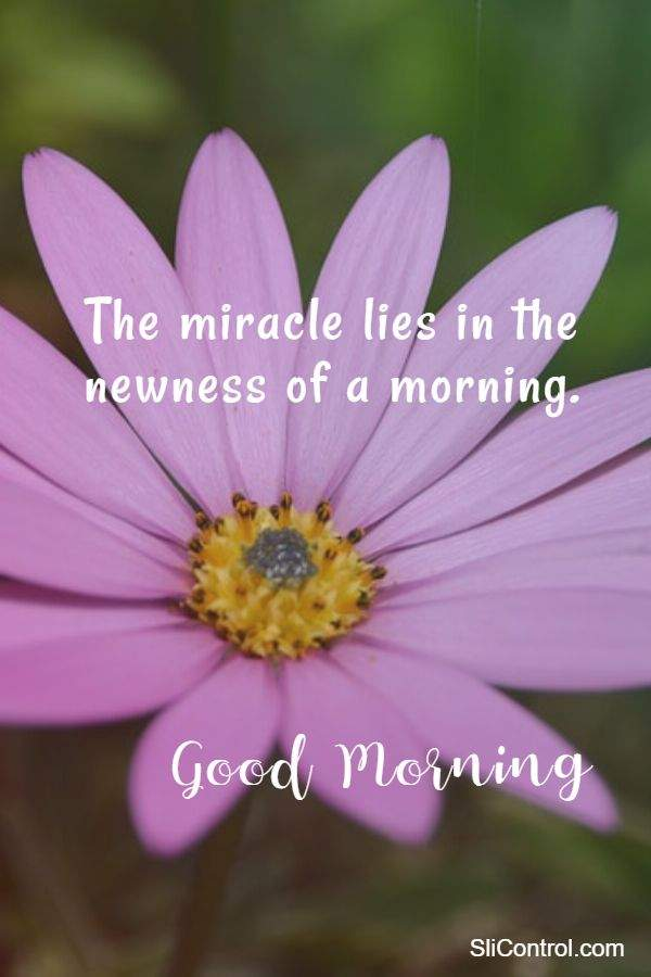 Awesome good morning messages wishes quotes with pictures