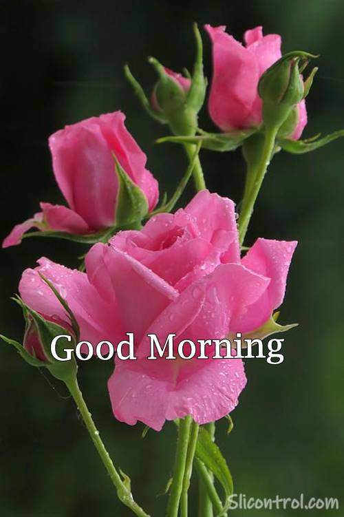 Good Morning Wishes With Rose 26