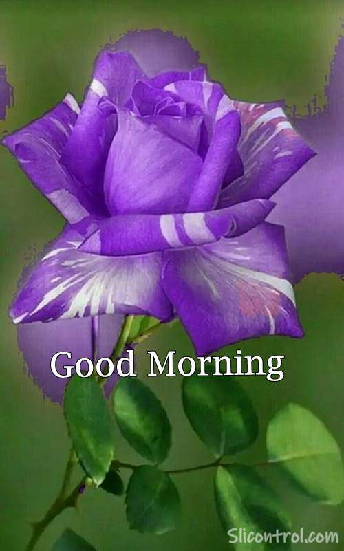 Good Morning Wishes With Rose 28