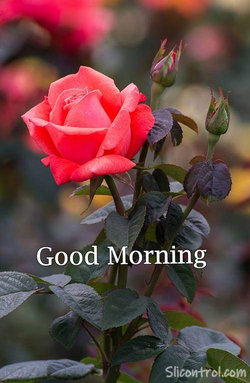 good morning wallpaper flowers