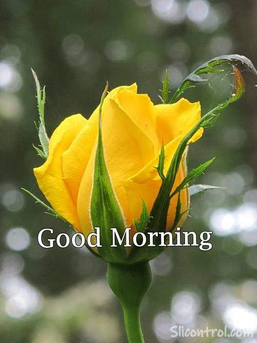 flowers with good morning quotes