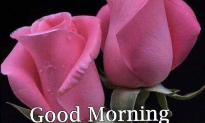 Good Morning Wishes With Rose 43
