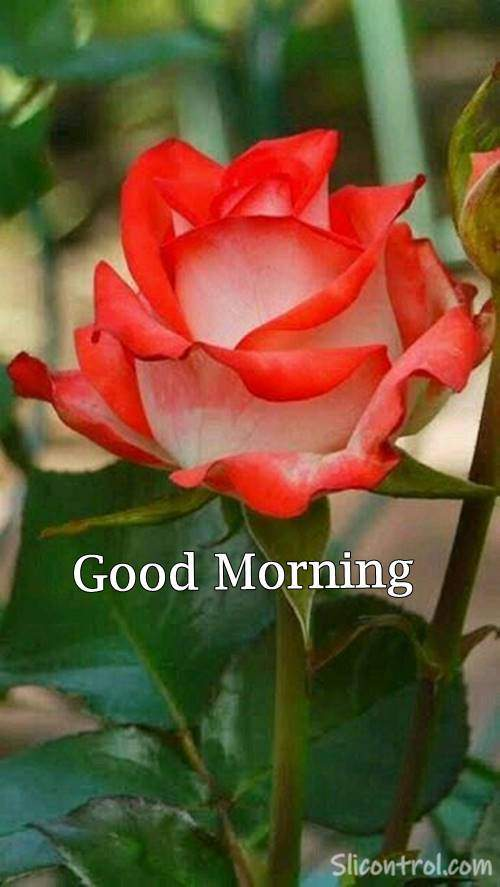 good morning message with flowers
