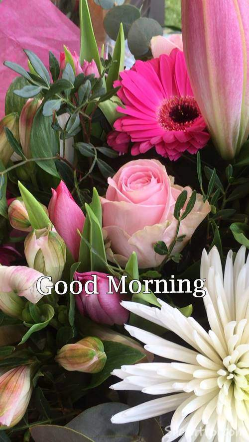 images of good morning wish