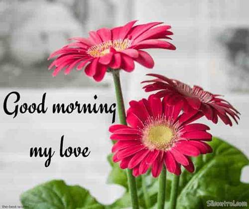 good morning wishes my love good morning love messages 6