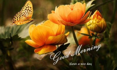 Good Morning Flowers Images with quotes