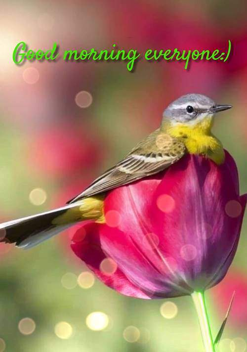 good morning quotes inspirational funny morning inspiration