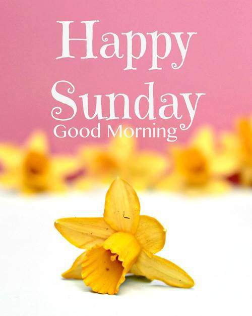 happy Good Morning Sunday Quotes Messages with pics