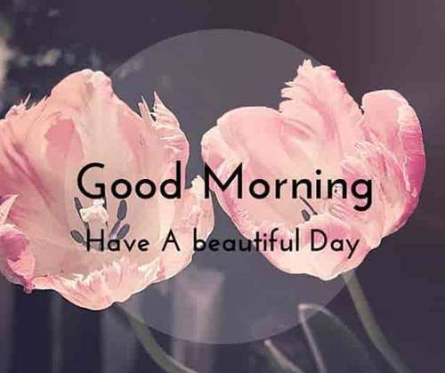 lovely good morning wishes with flowers flower gif
