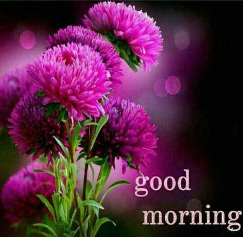 lovely good morning wishes with flowers good morning flower images hd