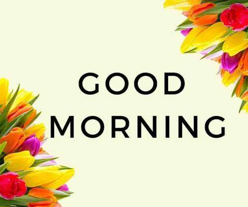 lovely good morning wishes with flowers good morning flower quotes
