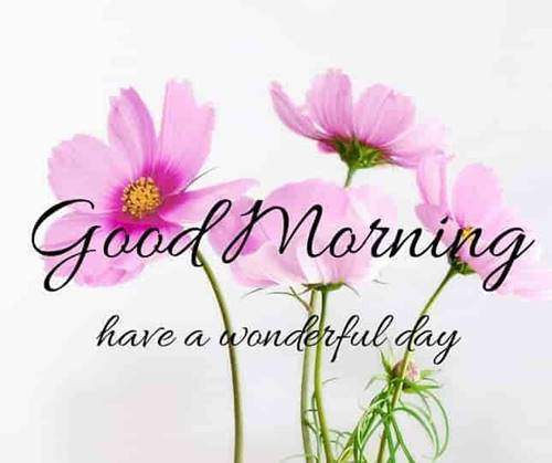 lovely good morning wishes with flowers good morning quotes love