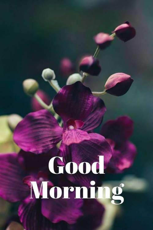 lovely good morning wishes with flowers good morning quotes to love