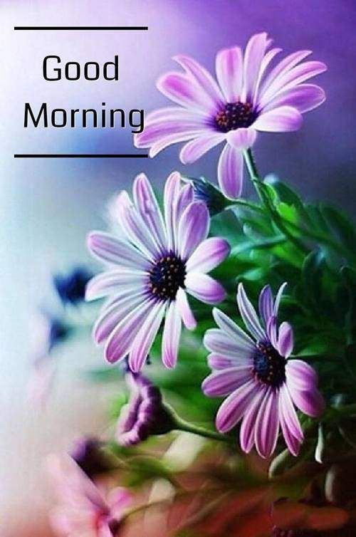lovely good morning wishes with flowers good morning quotes to wife