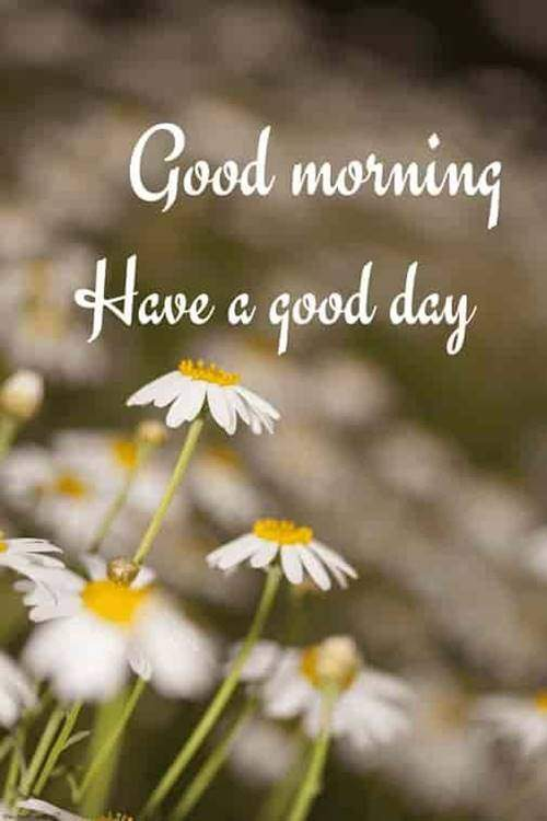 lovely good morning wishes with flowers good morning quotes