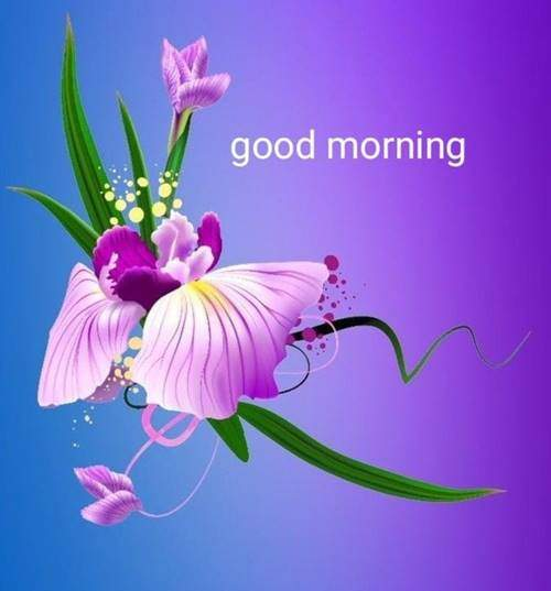 lovely good morning wishes with flowers image flower