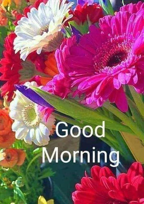lovely good morning wishes with flowers love wishes
