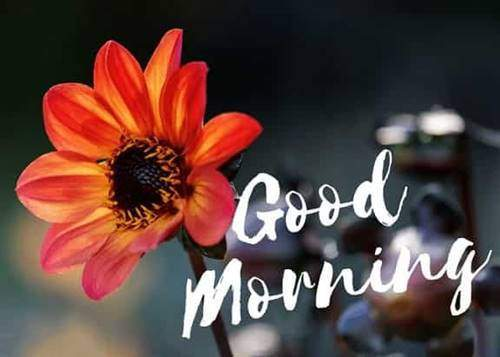 lovely good morning wishes with flowers queen quotes