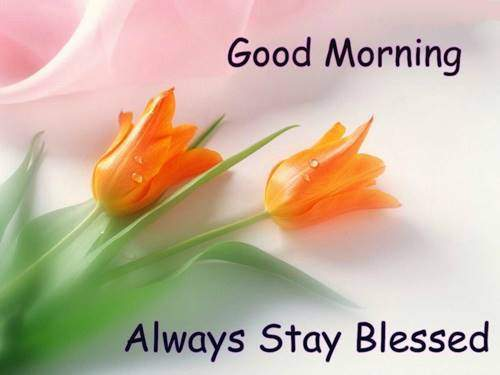 lovely good morning wishes with flowers quotes about good morning wishes