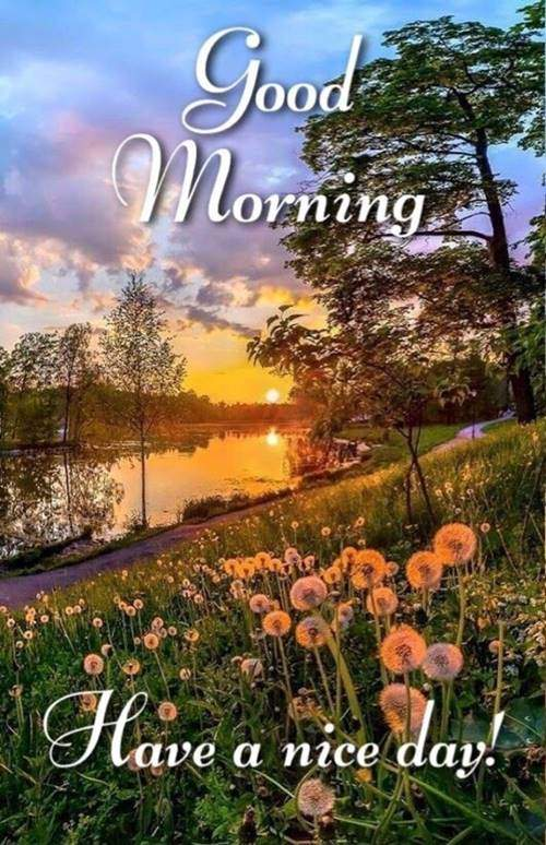lovely good morning wishes with flowers quotes and images