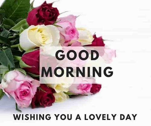 lovely good morning wishes with flowers quotes for friend