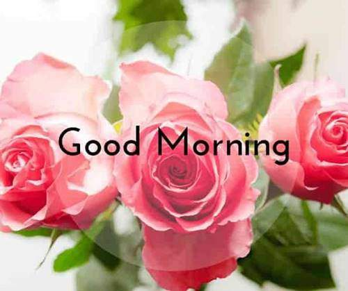 lovely good morning wishes with flowers quotes life