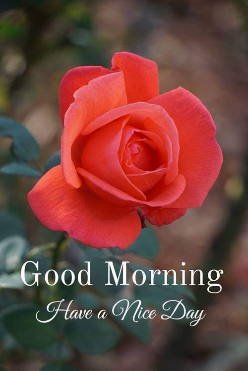 lovely good morning wishes with flowers quotes on good morning wishes