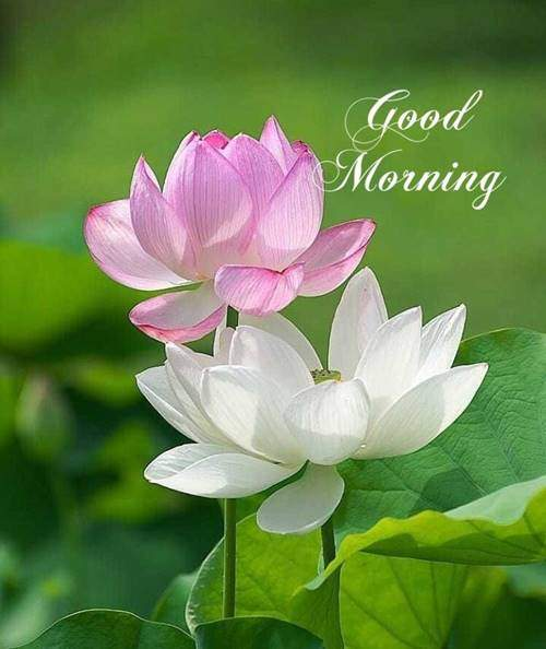 lovely good morning wishes with flowers quotes on life