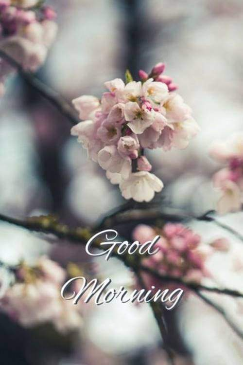 lovely good morning wishes with flowers quotes pictures