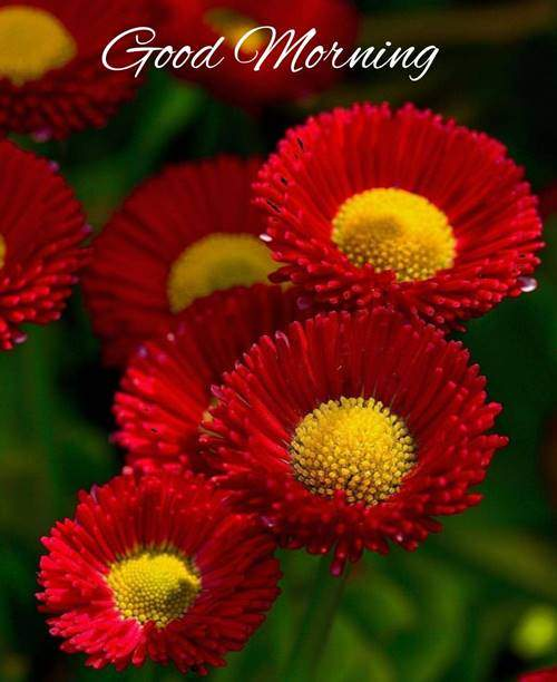 lovely good morning wishes with flowers quotes saturday
