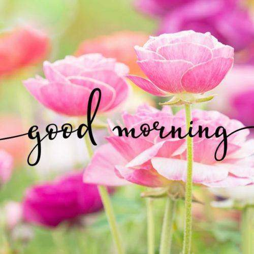 lovely good morning wishes with flowers quotes sunday