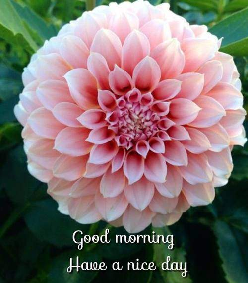lovely good morning wishes with flowers quotes wednesday