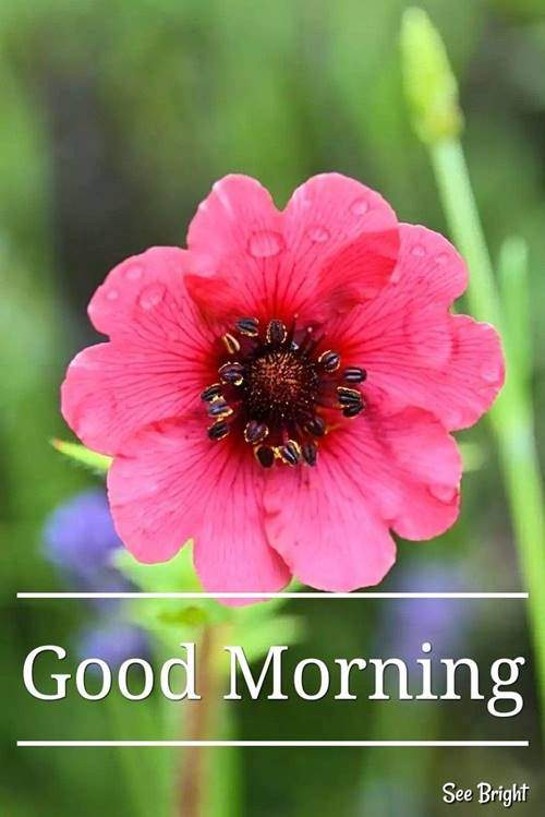 lovely good morning wishes with flowers quotes wishes