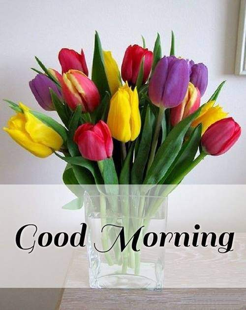 lovely good morning wishes with flowers wishes for him