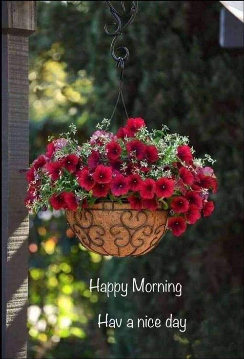 lovely good morning wishes with flowers wishes to her