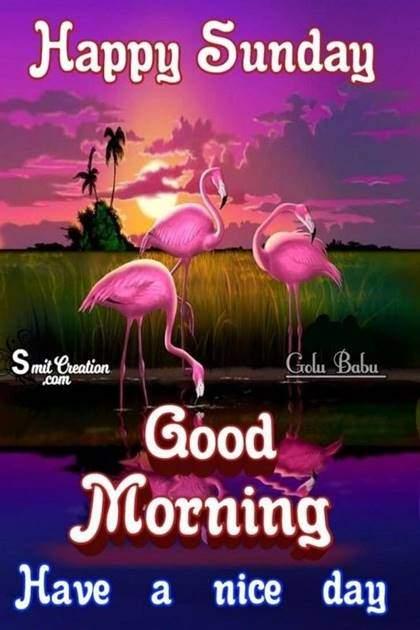 Good Morning Wishing You A Most Wonderful Sunday
