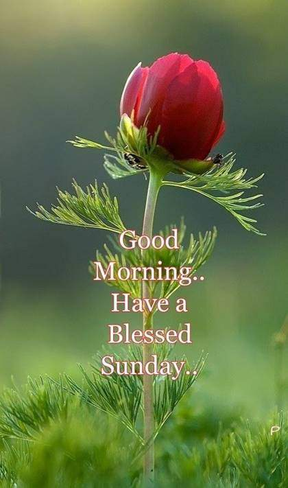 Good Morning Have A Great Sunday