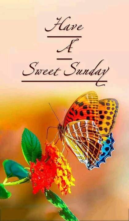 Beautiful Good Morning Sunday Pic